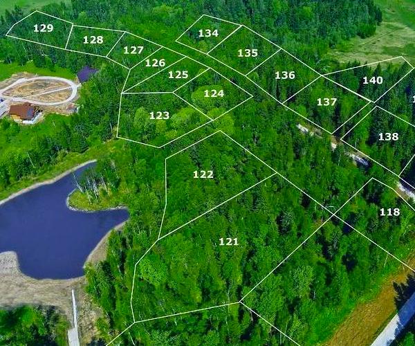 Как оформить лесной участок